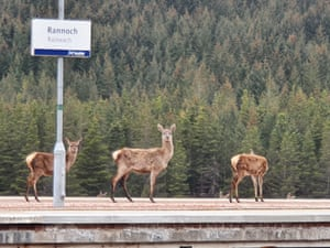 Deer on rail platform