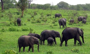 Wildlife authorities in Zimbabwe claim the country has too many elephants and that their sale raises funds for comnservation.