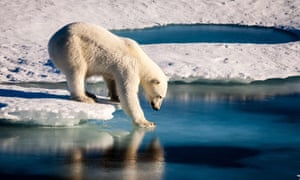 A polar bear tests the strength of thin sea ice in the Arctic. The environment was a topic that many of you requested we make our priority for 2019.