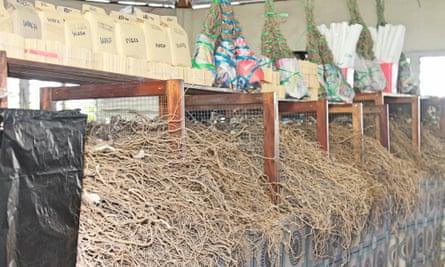 Dried kava at a Suva marketplace