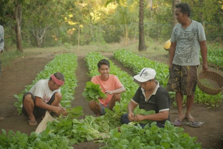 Villagers in Tembok harvest vegetables at a collective farm.