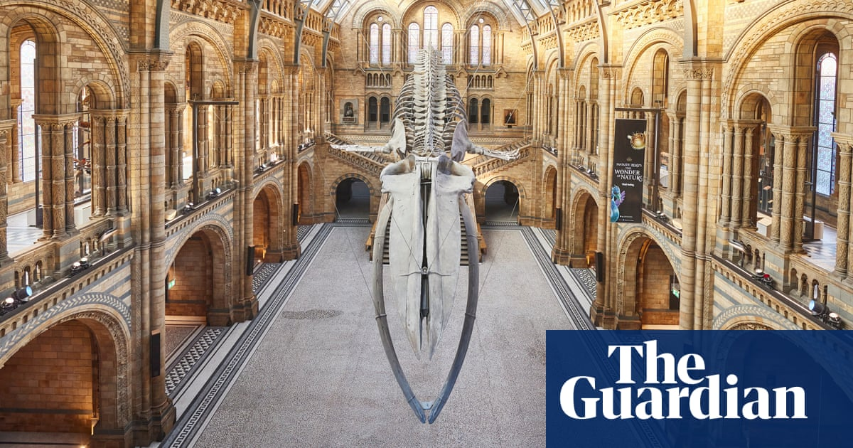 No visitors but teeming with life: what's going on inside the Natural History Museum?