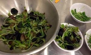 produce bowls