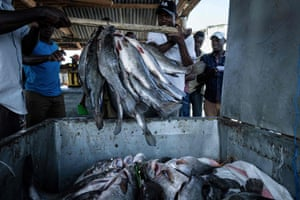 Fisherman deposit their catch into containers