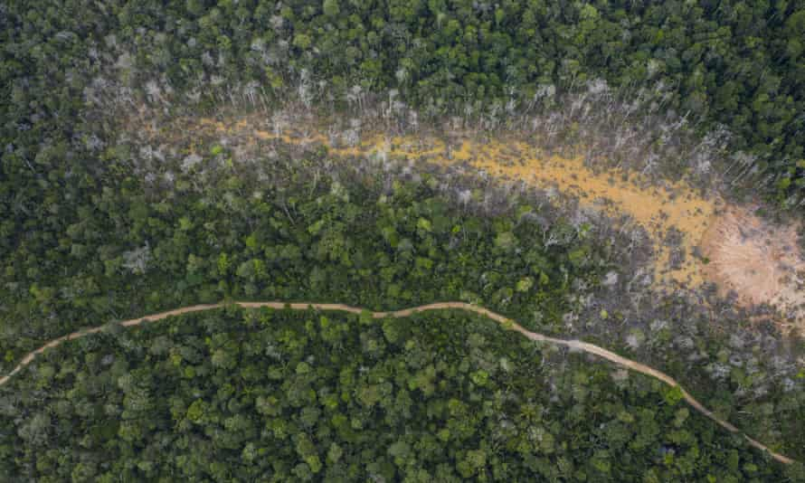 The destruction of jungle in Peru