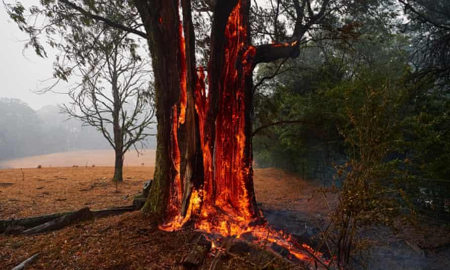 Tree on fire, Australia