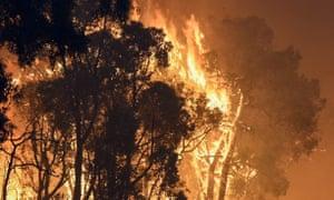 A bushfire in WA
