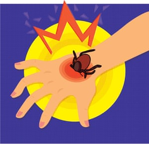 Lyme disease: is a solution on the way? | Science | The Guardian