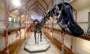 Dippy the diplodocus, at Dorset County Museum.