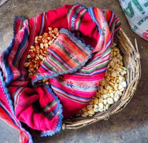 A weaved basket containing corn, which is to be boiled, and then known as mote. This is a staple in the diet in Bolivia, where this photo was taken.
