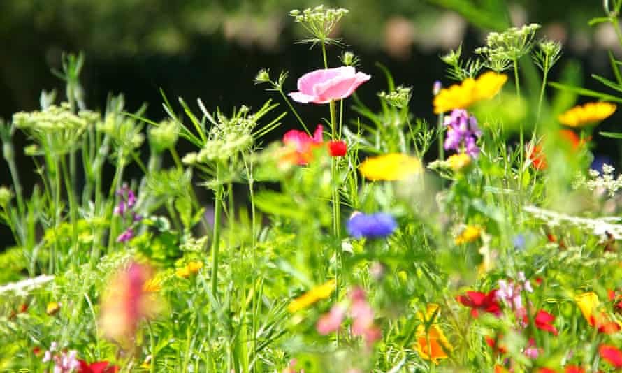 A wildflower meadow: 'every inch of soil is waiting for its moment to burst forth'.