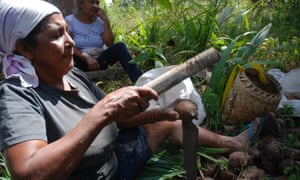 Tereza Teodoro Sousa breaking open babassu in a palm grove owned by the Catholic diocese in Maranahao in Brazil.