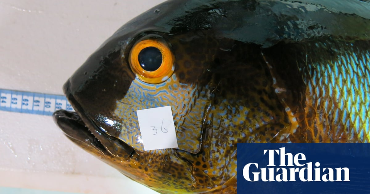Australian researchers find 81-year-old snapper, oldest known tropical reef fish