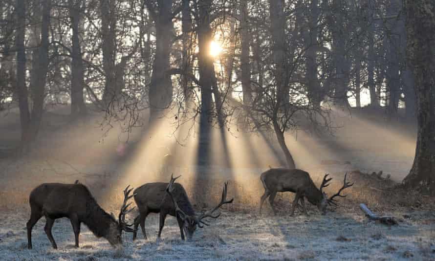 Richmond Park is a national nature reserve.