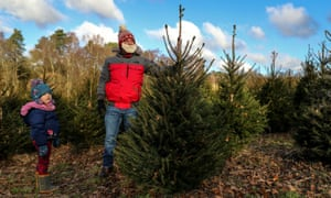 A family pick and cut their own Norway Spruce Christmas tree.