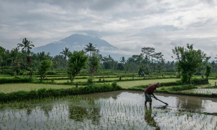 Mount Agung as seen from a nearby village in Karangasem, Bali. Photograph: Made Nagi/EPA