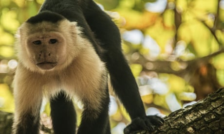 Costa Rica: 'the most biologically intense place on Earth'