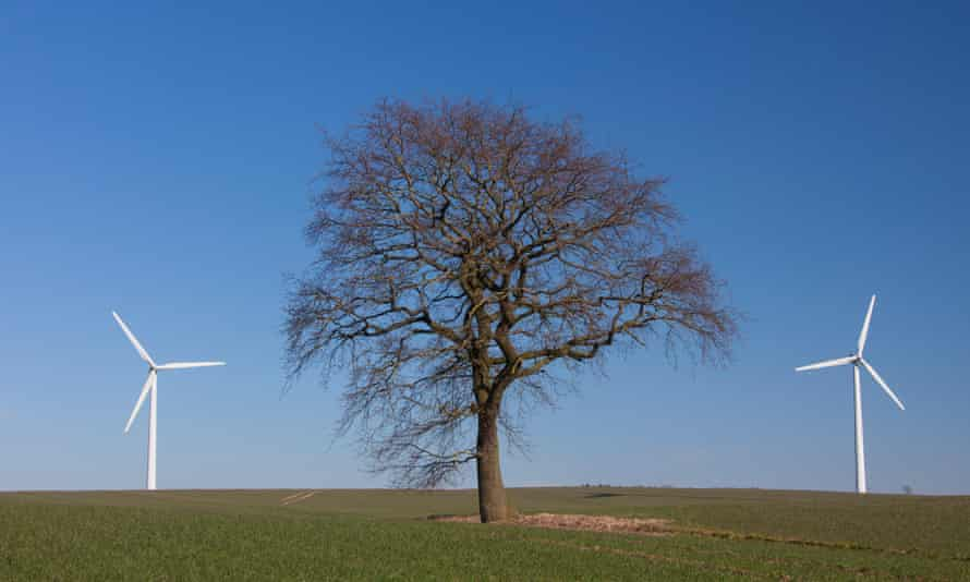 tree in between wind turbines
