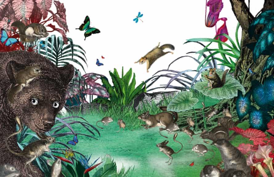 Illustration by Kristjana Williams for Into The Jungle.