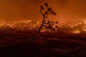California, US. A Joshua tree burns during the Bobcat fire in Juniper Hills. California faces more devastation from wildfires that have ravaged the west coast, with strong winds and dry heat expected to whip up flames from dozens of blazes raging across the state