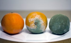 The ageing process of an orange.