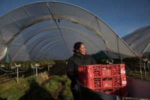 Petulisa Motulalo was one of the first Tongan women to come to Burlington Berries farm in Cressy, south of Launceston in Tasmania