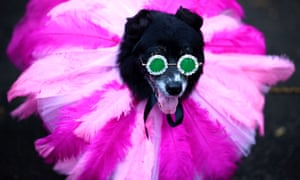 A dog dressed as Rihanna attends the Tompkins Square Halloween Dog Parade in Manhattan