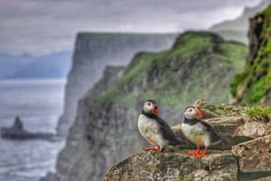Pair of mucky puffins  on Mykines,  Faroe Islands.