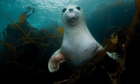 World Environment Day: Celebrating the UK's precious biodiversity