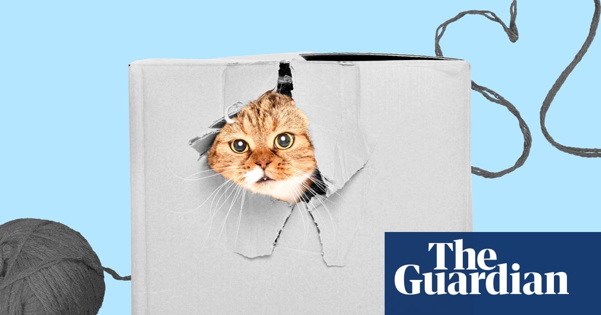 My pandemic epiphany: realizing the hole in my life was cat-shaped