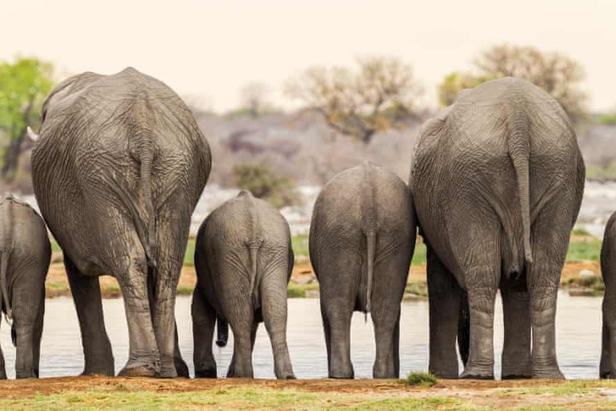Elephants in Etosha National Park.