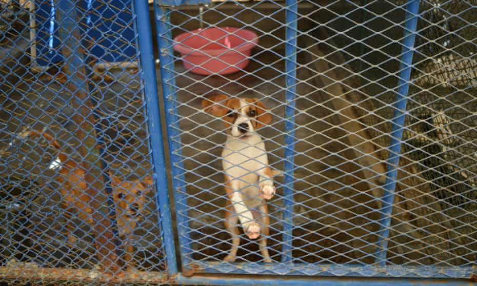 Stray dogs at the animal centre in Umm Al Quwain, Dubai.