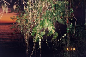 """Creeper, 2015 … A shot of foliage growing just outside Taboo. """"Music is the binding thread through all the people I worked with,"""" he says. """"It was very much a collaboration. You can't do photography in a vacuum."""""""