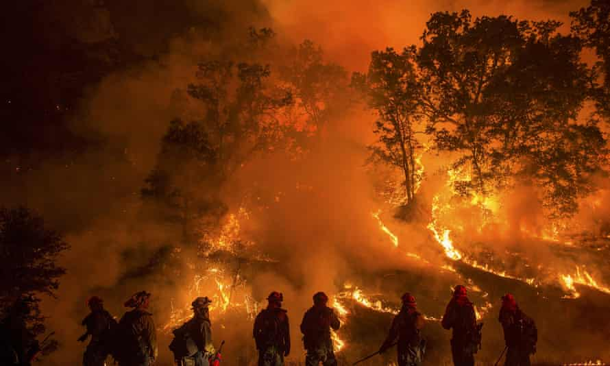 Bark beetles were particularly active in an area in Northern California where a wildfire, called Valley Fire, spread quickly and destroyed hundreds of homes last year.
