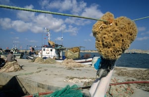 The Mediterranean sponge population was affected by a blight in the 1980s, but fishermen think this time is different.