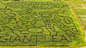 Illinois, US: A corn maze created at the Richardson Adventure Farm in Spring Grove, Illinois to celebrate the 50th anniversary of the Apollo 11 moon landing, covering 28 acres and containing more than 15km of paths