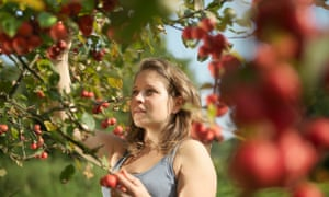 Picking apples at a UK orchard.