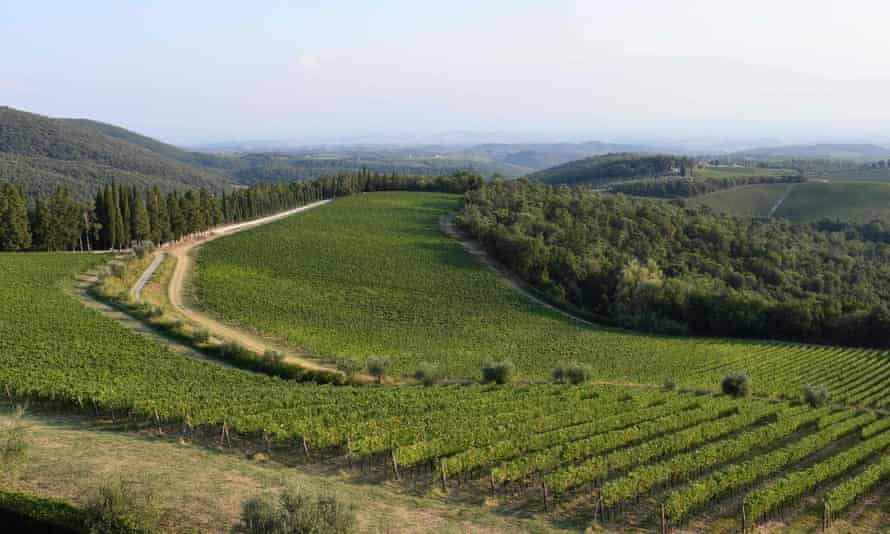 Sweeping hills: for decades Tuscany has been the home of many 'big reds'.