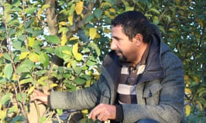 Farmer Mohammed Ibrahimi examines apples on his plot in Boumia