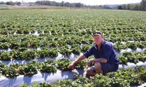 Adrian Schultz on his farm near Wamuran in Queensland