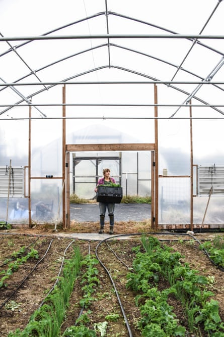 Liz Whitehurst, owner of Owl's Nest Farm outside of Washington DC, harvests greens from one of the farm's two greenhouses.