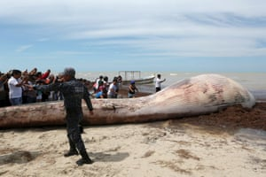 Progreso, Mexico: Onlookers take photographs of the carcass of a beached whale