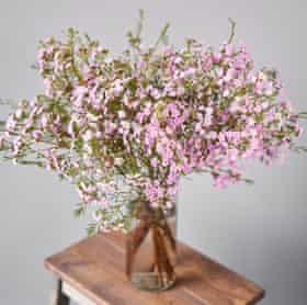 Chamelaucium, or Geraldton wax, a flower that looks as good as it tastes.