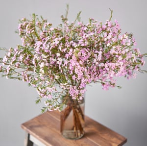 Chamelaucium, ou cire de Geraldton, une fleur aussi belle que goûteuse.