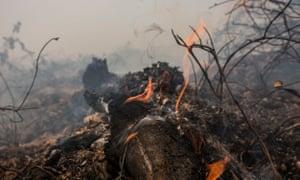 Burning log on peatland