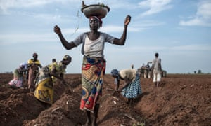 A women distributes cassava cuttings while others plant them on a recently prepared land.