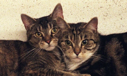 Want to leave your money to a cats' home rather than your family? There is nothing to stop you.