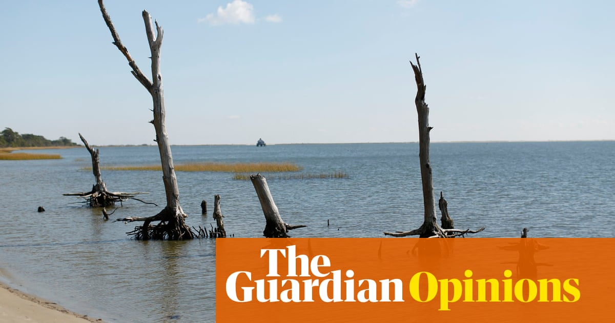 Sea-level rise is creating 'ghost forests' on an American coast