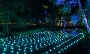 Faskally woods illuminated