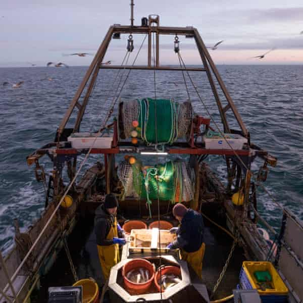 A catch is processed onboard a fishing boat operating out of Newhaven, East Sussex. At least 75 bats use the fly-shooting method in the Channel.